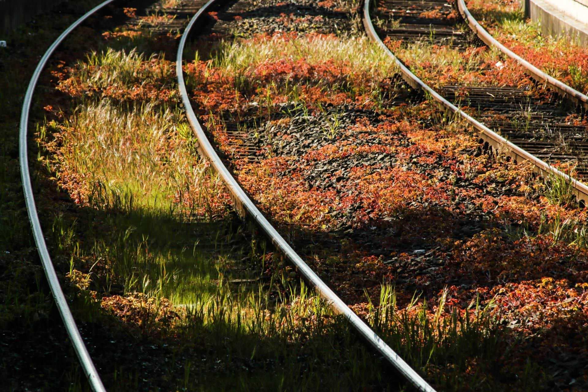 Dampfzüge von und nach Bochum- Dahlhausen
