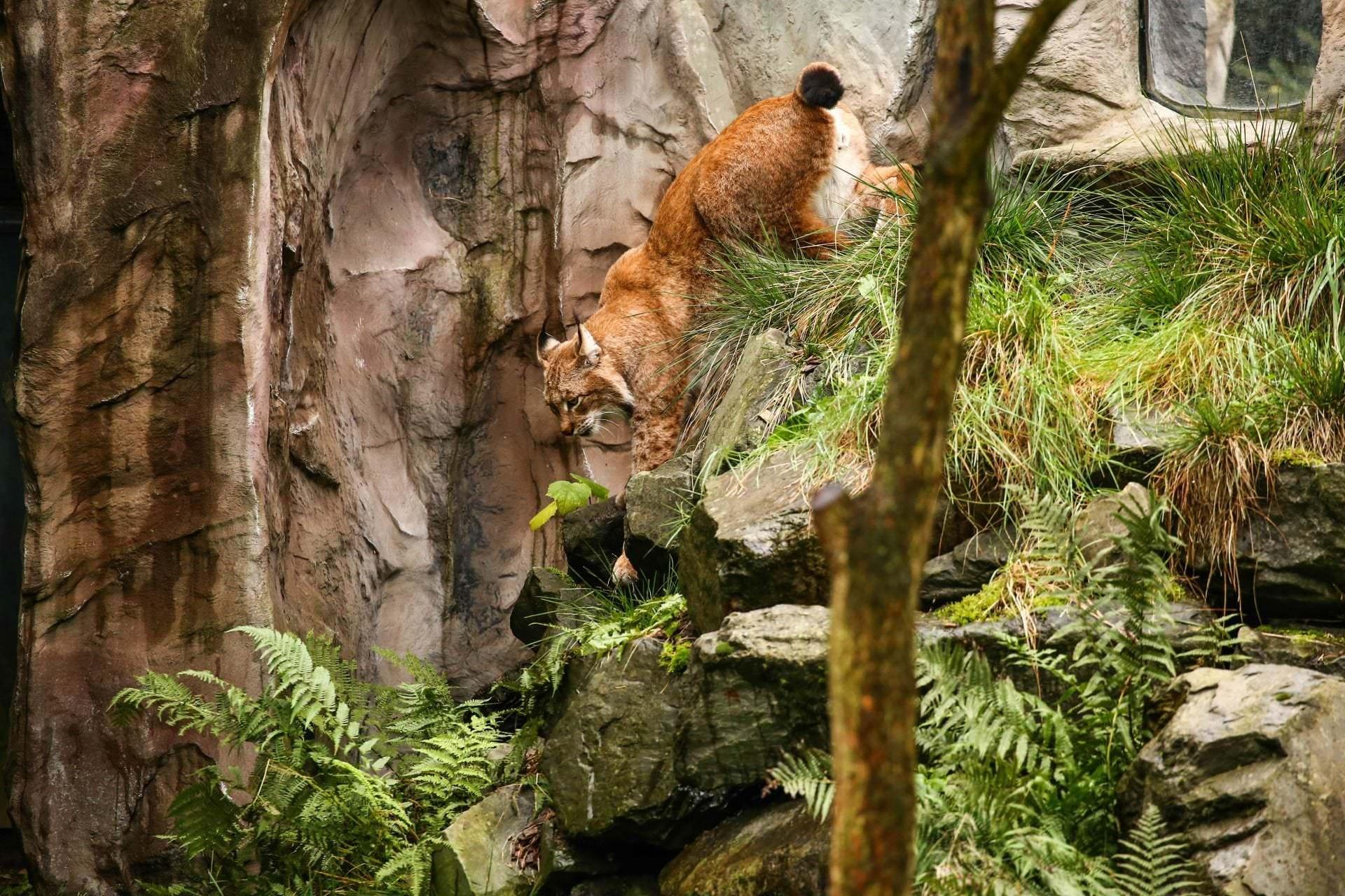Objektivtest im Zoo