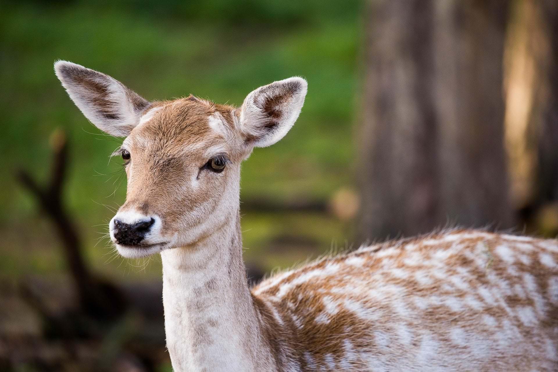 07.10.2018 Naturwildpark Granat Haltern - Der Fotowikinger