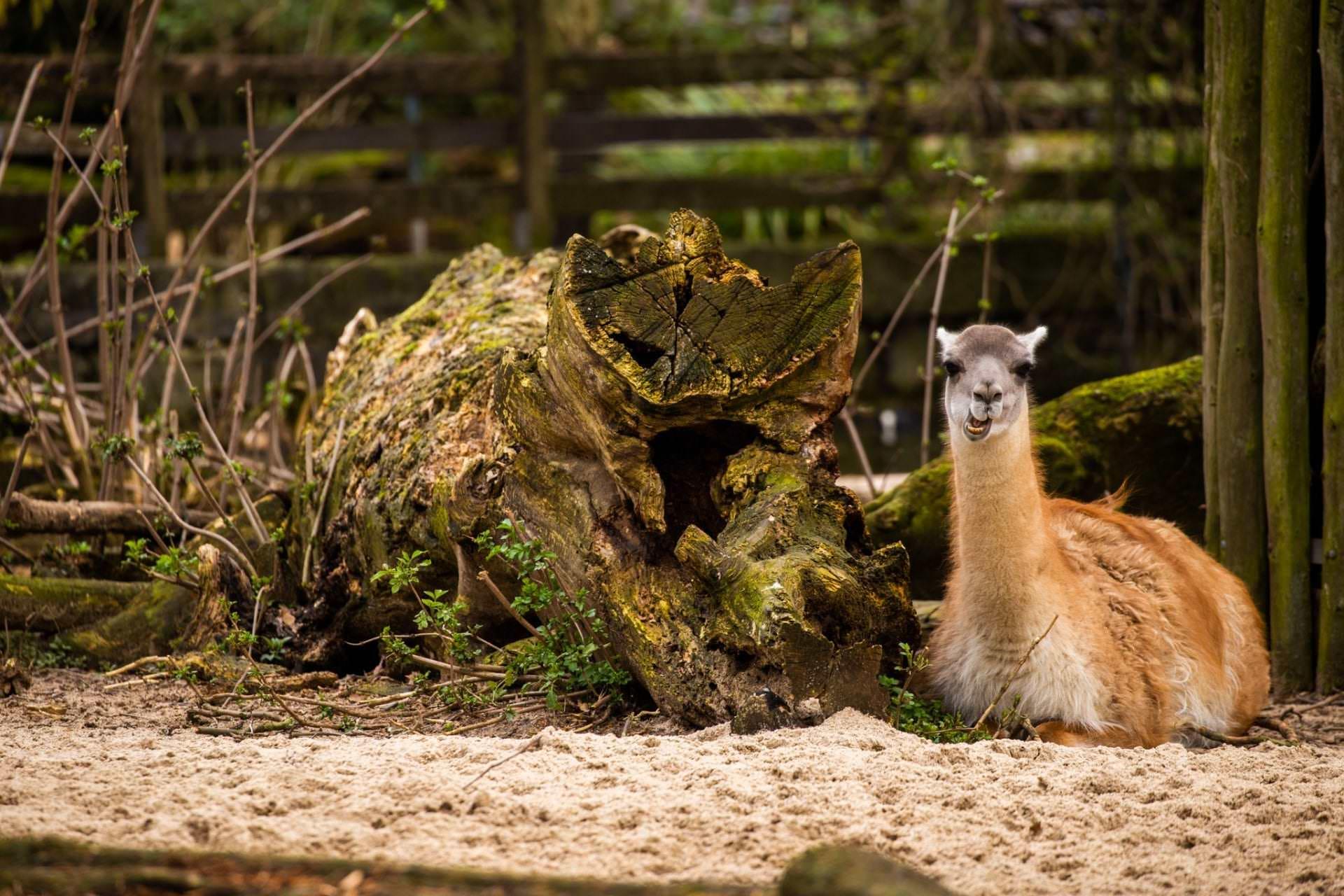 02.03.2020 Besuch im Krefelder Zoo